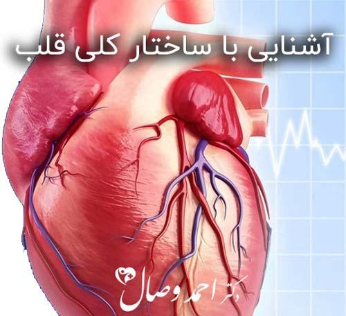 آشنایی با ساختار کلی قلب